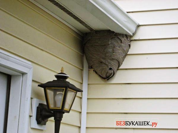 Осиное гнездо под крышей дома