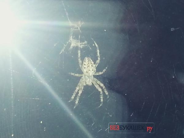 Паук сплел паутину на окне