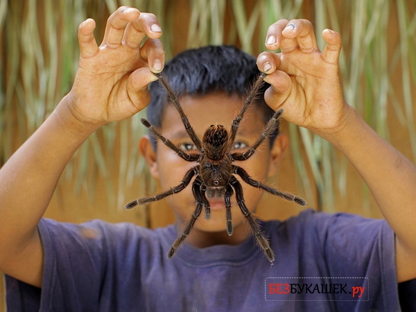 Большой паук в руках у мальчика