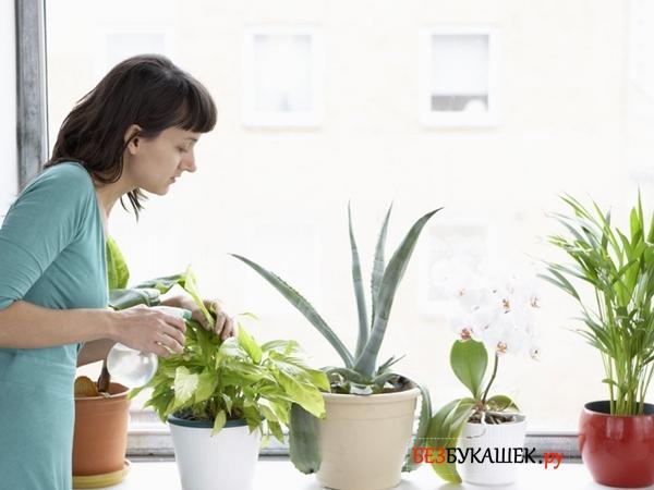 Борьба с паутинным клещом на комнатных растениях