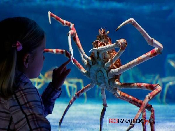 Вот так выглядит крабовый паук