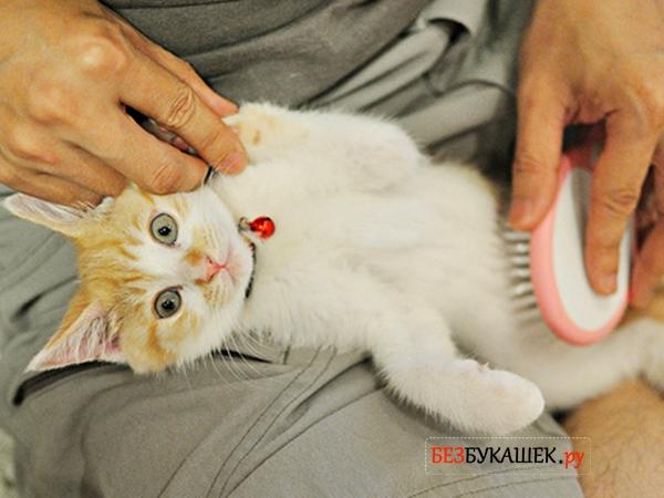 Вычесывание блох у котенка при помощи мягкой щетки