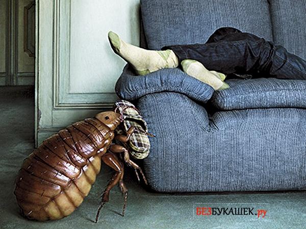 Клоп лезет на диван