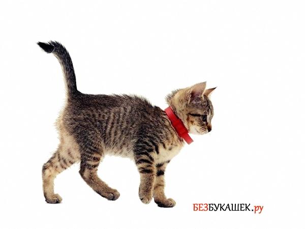Котенок в ошейнике от блох