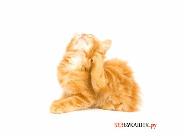 Котенок чешется из-за наличия блох