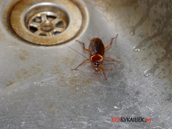 Наличие воды способствует появлению тараканов