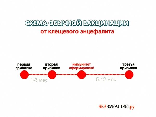 Обычная схема вакцинации от клещевого энцефалита