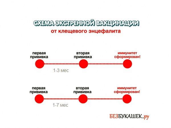 Схема экстренной вакцинации от клещевого энцефалита