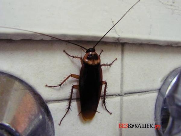 Таракан ползет по стене