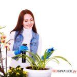 Как избавиться от паутинного клеща на растениях в комнате