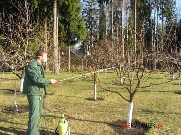 как бороться с тлей на фруктовых деревьях