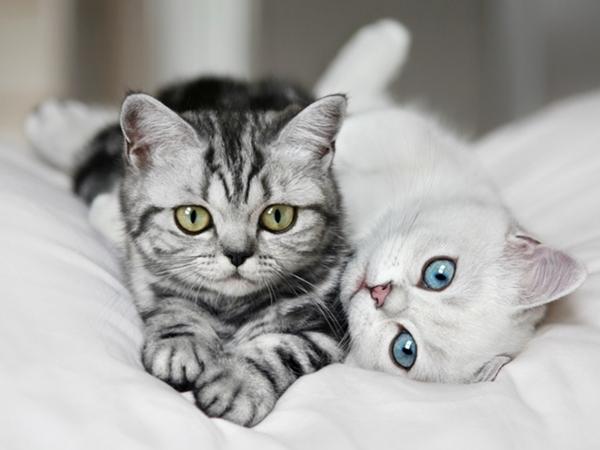 Две здоровые кошки