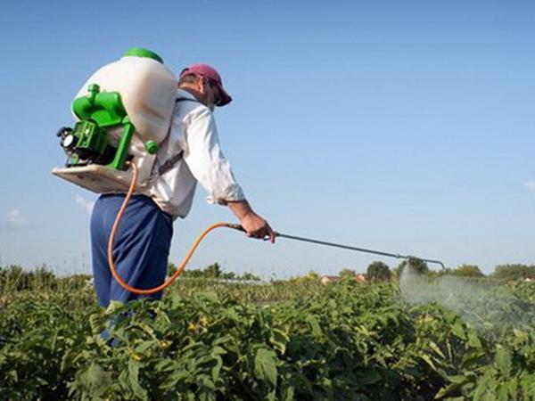 Опрыскивание картофеля от колорадских жуков с применением химикатов