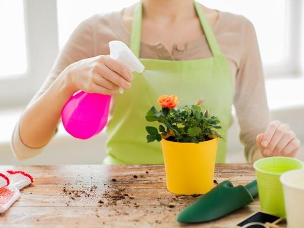 Процесс избавления комнатного цветка от вредителя
