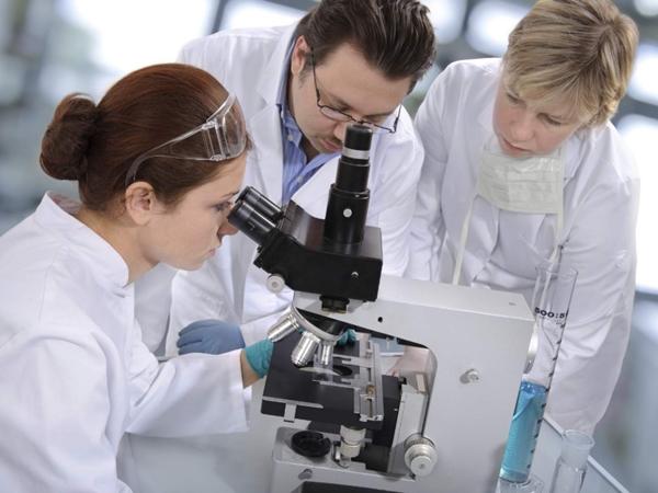 Ученые изучают свойства осиного яда