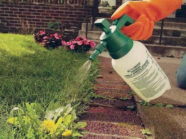 Применение инсектицидов для обработки насаждений