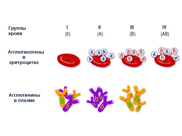 Обзор групп крови